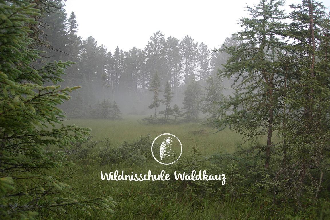 sumpfiger Wald , umgeben von Kiefern mit dem Logo der Wildnisschule Waldkauz